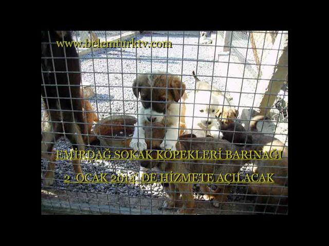 Emirdağ Sokak Köpekleri Barınağı Hizmete Açılacak