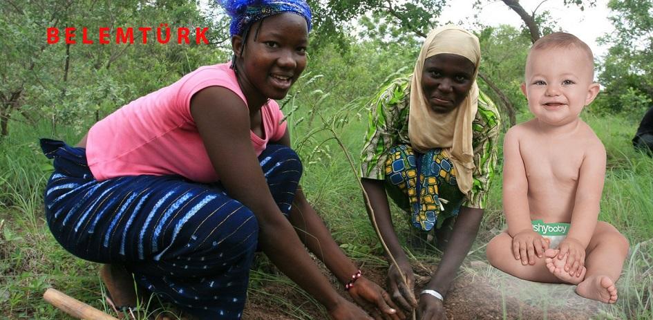 Brüksel'de Her Yeni Doğan Bebeğe Afrika'da Bir Ağaç