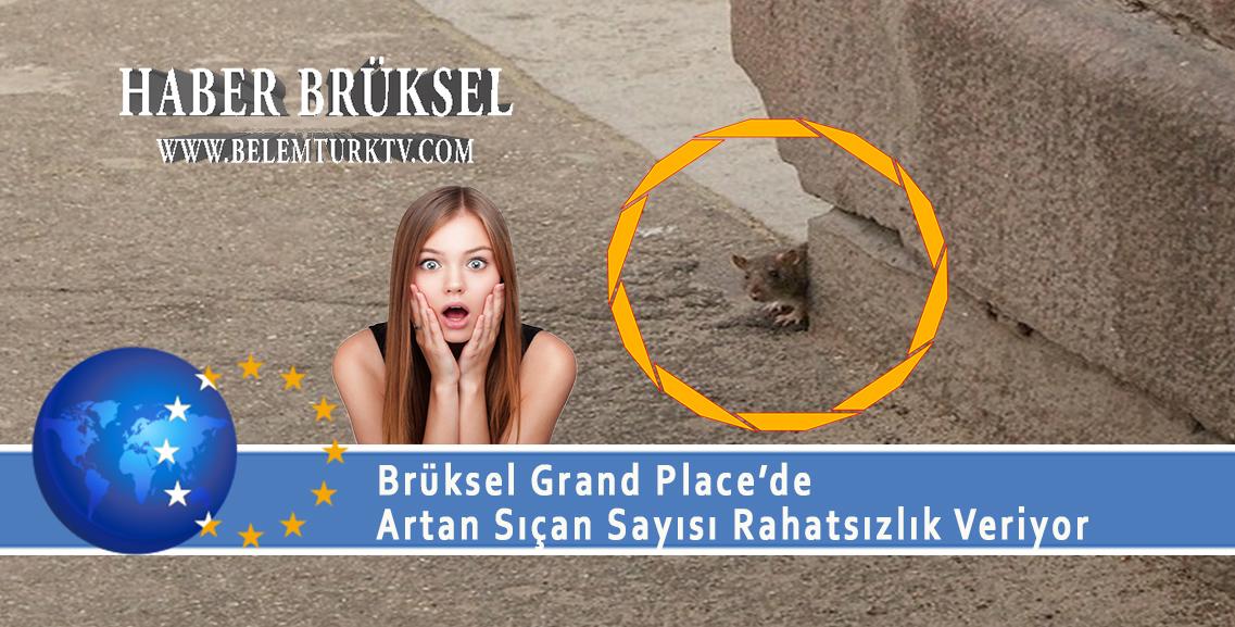 Brüksel Grand Place'de artan sıçan sayısı rahatsızlık veriyor