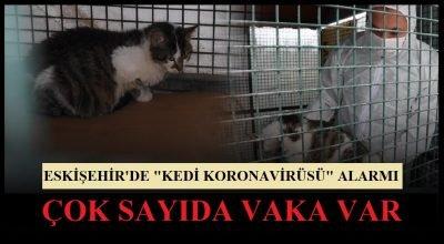 """Eskişehir'de """"Kedi Koronavirüsü"""" Alarmı! Çok Sayıda Vaka Var."""