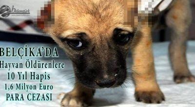 Belçika'da hayvan öldürenlere 10 yıla kadar hapis ve 1,6 milyon Euro para cezası